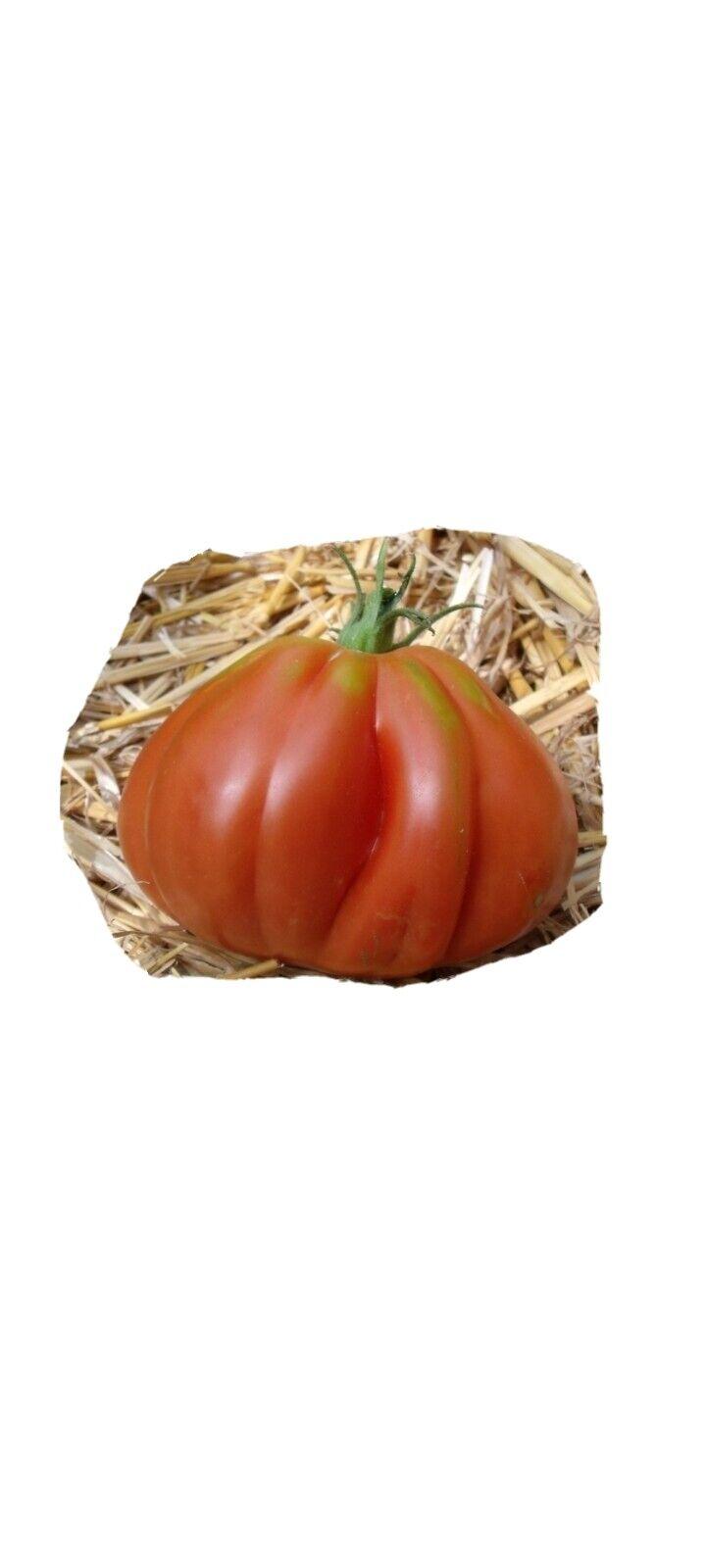 Graines de tomates anciennes liguria